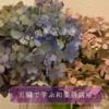 『対面レッスン』と『あじさいの花』