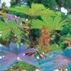聖書の植物(14)ー「とうごま」