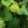 花を愛で、息吹きを感じる。この小さくも深い喜びの日常・・・のお話。
