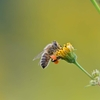 🐝荒川河川敷で昆虫撮影しました🦋