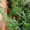 アーユルヴェーダのトリートメントとケア方法 自然の植物でできた湿布