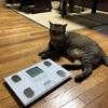 タニタ 体重・体組成計 インナースキャン50 BC-314で猫の体重も量れた♡ けど、驚愕の事実が。。。
