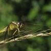 今日も昆虫観察