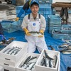 2018年5月26日 小浜漁港 お魚情報