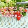【愛知県南知多町】いちごの丘 さんのいちごのパウンドケーキをいただきました