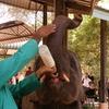 世界一周ピースボート旅行記 16日目~スリランカ(コロンボ)~②「ゾウの孤児院」