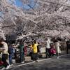 2021年3月26日の目黒川の桜