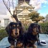 愛犬とのジョギングやお散歩に便利なサングラス🕶人気ブランドAXEのメガネの上からでもOKなメンズ/レディース偏光オーバーグラス!
