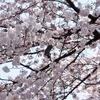 「東京さくら財宝電:空と大地の桜財宝を探せ」謎解きレビュー