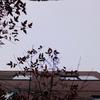 作曲工房 朝の天気 2018-02-21(水)くもり