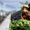 第36回 「豆」を求めて、全国から人が集まる奇祭って?
