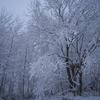 雪のあとさき
