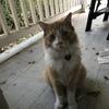 ブルーベリーアーモンドケーキ:猫たちのご近所集会