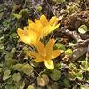 春の花とお雛様