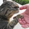 7月前半の #ねこ #cat #猫 その1