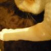 3にゃん's~猫の手も借りたい