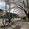 2020.4.2 桜とお昼寝 39km