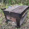 春が近づき、ミツバチ達も活発になります。