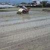 田植えを2回に分けるのは稲刈りの都合