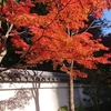 東京小石川後楽園『江戸の面影残す白壁と紅葉』