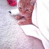 続・自然のサプリについて。猫に安全な生薬、人間に怖いサプリ(追加あり)