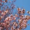 中島公園に春が来た