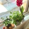 グリーンでお出迎え.salon柚子香の空間づくり