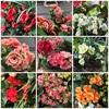 「温室 春の装いに」💐🌷🌹🌸春日井市都市緑化植物園🥀🌺🌼一足早い春を感じに植物園にいらっしゃいませんか?