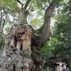 熱海のパワースポット 来宮神社の大楠を待ち受けにする効果やロケ地としての情報を解説!