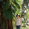 コスタリカ 背景はサンホセの公園の植物