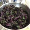 梅干しに赤紫蘇を入れた。楽しみ。