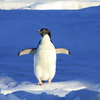 Googleのペンギンさんがリアルタイムでやってくる時代になりました