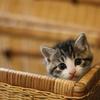 保護猫に出会ったらー月齢を判断しようー
