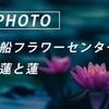 大船フラワーセンターの夏:Sony α7c + SEL135F18GM
