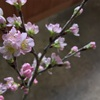 お花の定期便 3月号