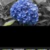iPhone Xで撮影した写真でも「ボケ調整」がGoogleフォトで可能に!