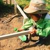 毎朝の畑仕事が始まりました! たんぽぽ団に入りたい息子の日課