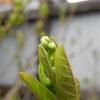 春待ちの風景