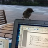 品川インターシティーで人なつこい雀に出会う