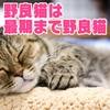 野良猫は最期まで「野良猫らしい生き方」を貫き通す。