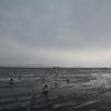 今年最初の海は雨…