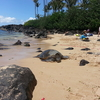 2015 ハワイ旅行 ④ノースショア パイナップルガーデン
