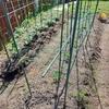 家庭菜園 支柱が少なくてもいい方法 ピーマンとナス