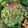 「佐久の季節便り」、「草花の種子採り」を始めました。