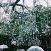 箱根の旅、ガラスの森美術館と大涌谷