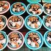 プサン旅行3日目―チャガルチ市場と甘川洞文化村(珍スポットかも?)