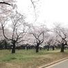 【速報】代々木公園は3/27から閉鎖です!