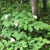 白い花の季節