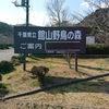 幹事さん必見! 館山で花見をすべき5つの理由(2)館山野鳥の森