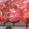 【種月寺】紅葉が見頃 ~弥彦山スカイライン